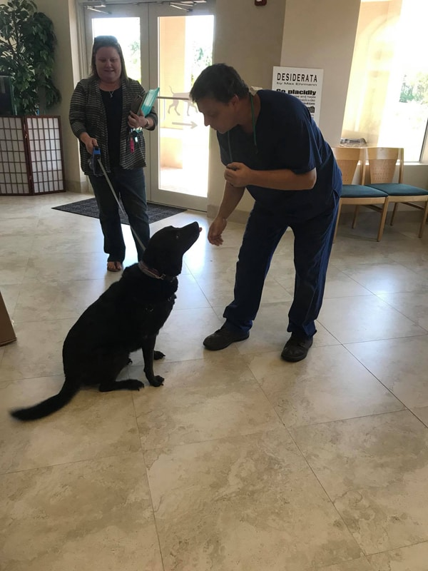 One of the team members leaning down to greet one of the first patients a large black labrador