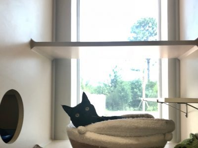 A black cat laying in a comfy bed in one of the Luxury Cat Condos at the pet hotel. It includes a climbing area, bed and window to look outside